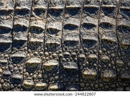 Crocodile skin texture. - stock photo