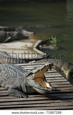 Crocodile with jaws open on a hot day - stock photo