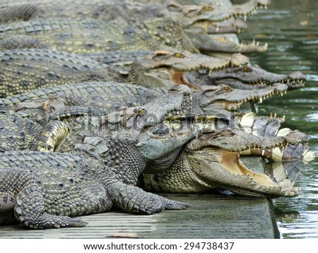 Crocodile with open mouth - stock photo