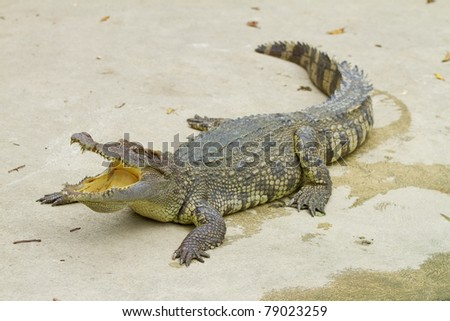 crocodile with open mouth resting - stock photo