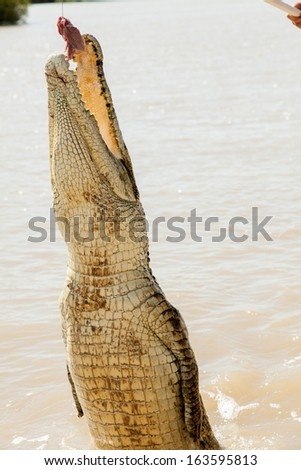 Crocodiles have learnt to jump for meat in Adelaide River Northern Territory - stock photo