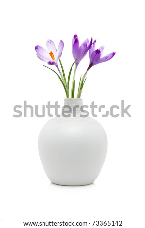 Crocus flowers in white vase, isolated on white - stock photo