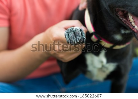 Cropped image of a dog's owner holding his dog�¢??s paw on the foreground - stock photo
