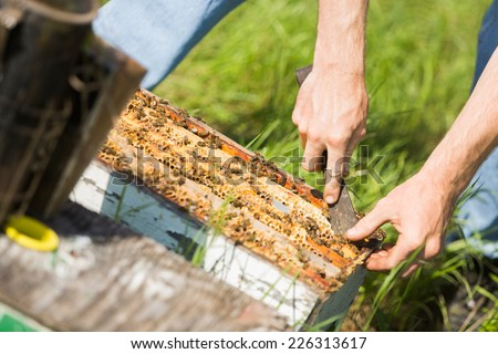Cropped image of beekeeper removing honeycomb frames from crate at apiary - stock photo