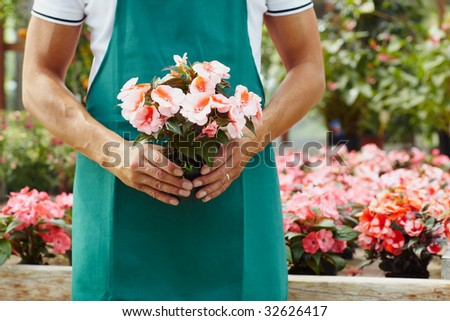 cropped view of male florist holding plant - stock photo
