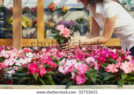 cropped view of woman choosing pink flowers in garden center - stock photo