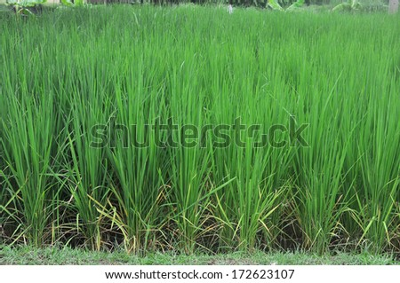 Crops in the green. - stock photo