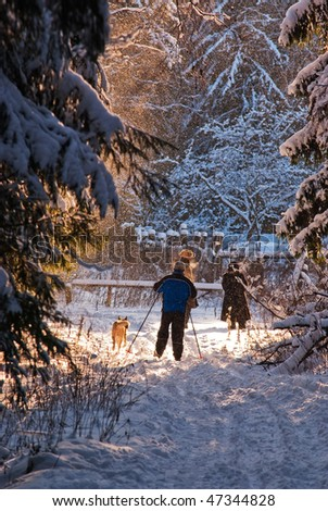 Cross country skiing in wood - stock photo