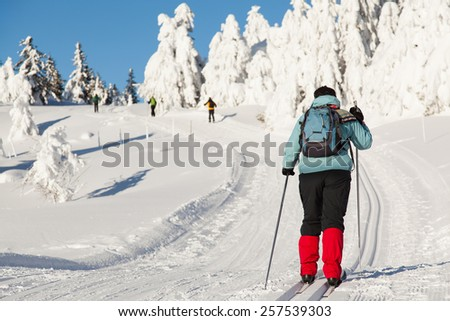 Cross country skiing on a sunny winter morning - stock photo