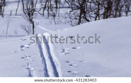 Cross country tracks on a mountainside. Newly fallen snow and sunshine. Trees and shadows in the background. - stock photo