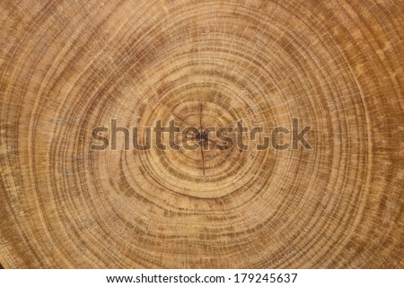 cross section log texture - stock photo