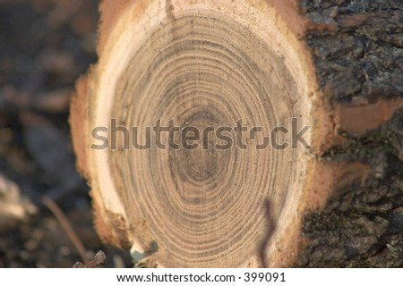 cross-section of a tree - stock photo