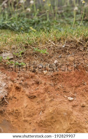 Cross-section of grass and soil, vertical orientation - stock photo