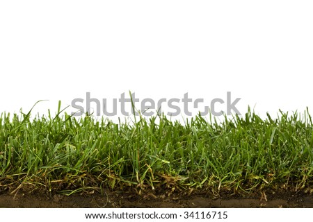 cross-section of grass sod isolated on white - stock photo