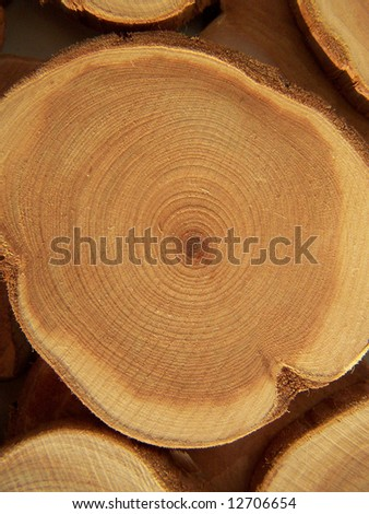Cross section of juniper tree. Close up. - stock photo