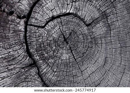 cross section of stump - stock photo