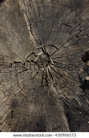 Cross section of the old dead wood - stock photo