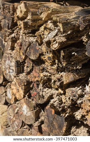 Cross section of the timber damage from termite, firewood stack for the background - stock photo