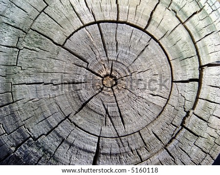 Cross-section of the tropical old tree  in Asia - stock photo
