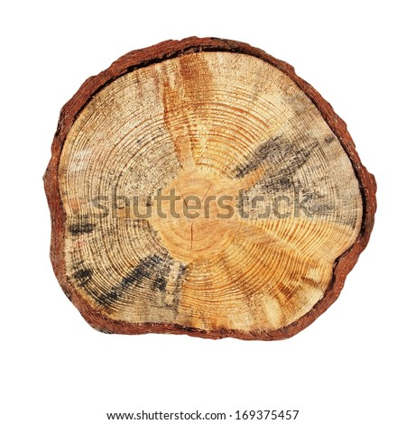Cross section of tree trunk isolated on white background - stock photo