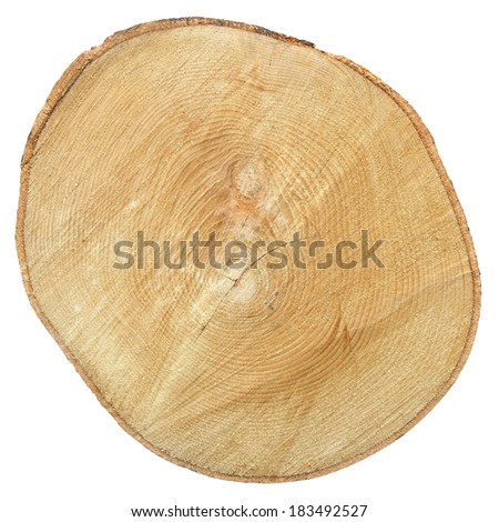 Cross section of tree trunk isolated on white background with Clipping Path - stock photo