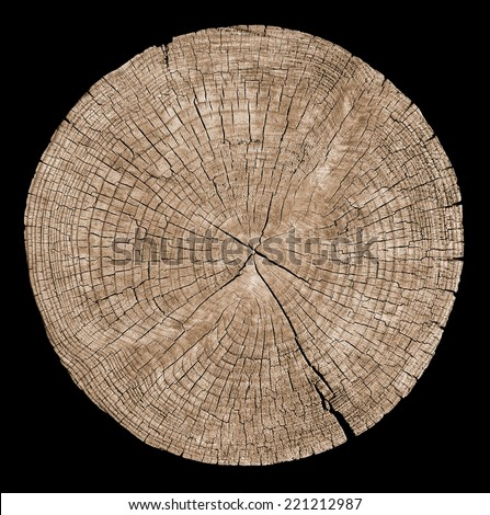 Cross section of tree trunk showing growth rings on black background - stock photo