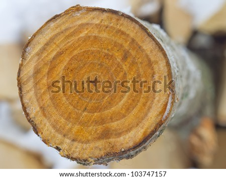 Cross-section saw cut of a log of an aspen. - stock photo