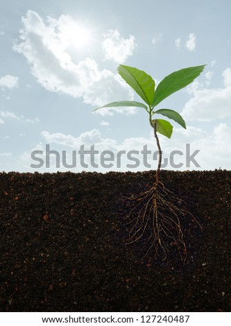 cross section view of a plant with roots - stock photo