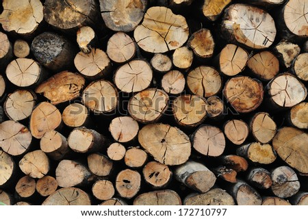Cross-sectional image of firewood - stock photo