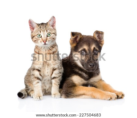 crossbreed dog and tabby kitten looking at camera. isolated on white background - stock photo
