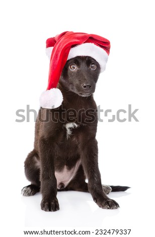 crossbreed dog with red santa hat. isolated on white background - stock photo