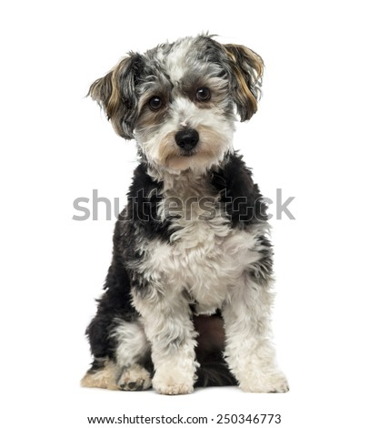 Crossbreed dog (1 year old) - stock photo
