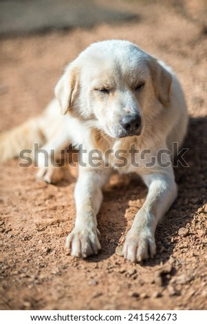 Crouching Vagrant dog ,very shallow depth of field - stock photo
