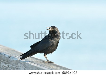Crow on a pier rail with blue background - stock photo