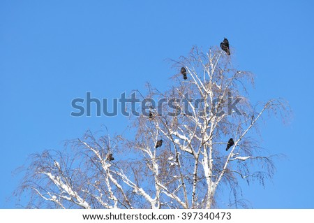 Crow on snowy branch - stock photo