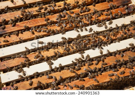 Crowd of working bees on the hive - stock photo