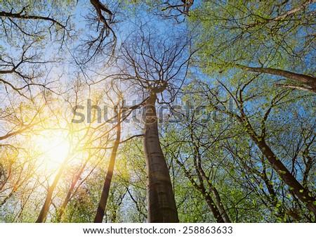 Crown of a trees in deciduous (leaf) forest depths in sunny spring day. Super detailed sharp image captured with Zeiss 21mm f/2.8 Distagon T* Lens - stock photo