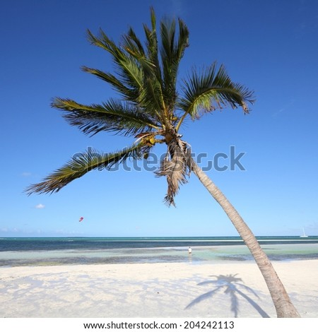 Cuba - Caribbean beach Cayo Guillermo. Sandy coast and coconut palm tree. Jardines del Rey region. Square composition. - stock photo