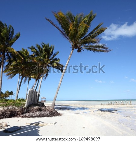 Cuba - Caribbean beach Cayo Guillermo. Sandy coast nad coconut palm trees. Jardines del Rey region. Square composition. - stock photo
