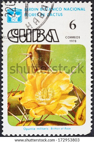 CUBA - CIRCA 1978: A postage stamp printed in the Cuba shows blossoming of Opuntia militaris cactus in National botanical garden, circa 1978 - stock photo