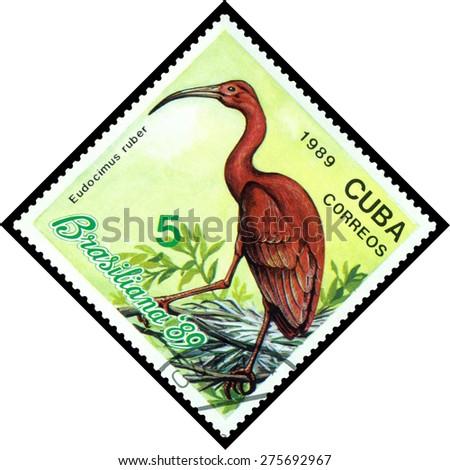CUBA - CIRCA 1989: A stamp printed by Cuba, shows  bird  Eudocimus Ruber, Exotic Birds, Brasiliana 89, circa 1989  - stock photo