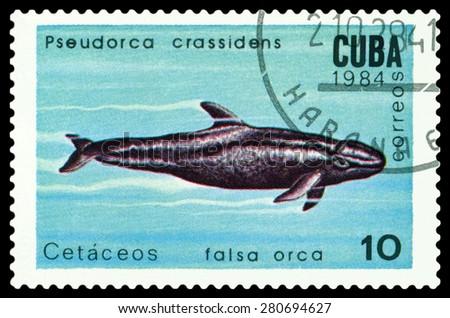 CUBA - CIRCA 1984: a stamp printed by Cuba shows  False Killer Whale,  Marine  Mammals,  circa 1984 - stock photo