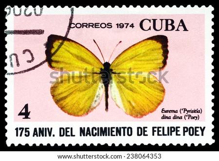 CUBA - CIRCA 1974: A stamp printed in Cuba shows butterfly  Eurema dina dina, series Felipe Poey, circa 1974.  - stock photo
