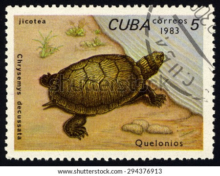 CUBA - CIRCA 1983: A stamp printed in Cuba shows Chrysemys decussata, series devoted to turtles, circa 1983 - stock photo
