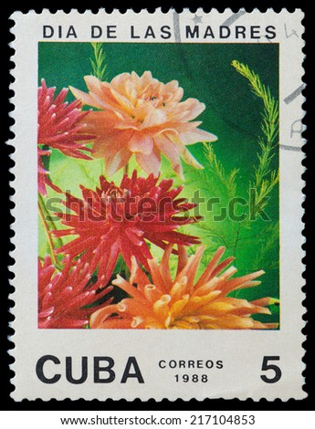CUBA - CIRCA 1988: A stamp printed in Cuba shows flower aster, circa 1988 - stock photo