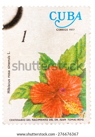 CUBA - CIRCA 1977: A stamp printed in Cuba shows the flower Hibiscus rosa-sinensis, circa 1977 - stock photo
