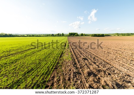 cultivated field and blue sky with sun in summer - stock photo