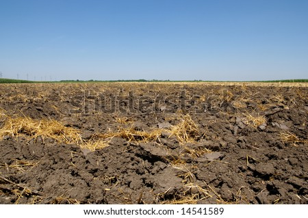 Cultivated land in summer after harvest of wheat - stock photo
