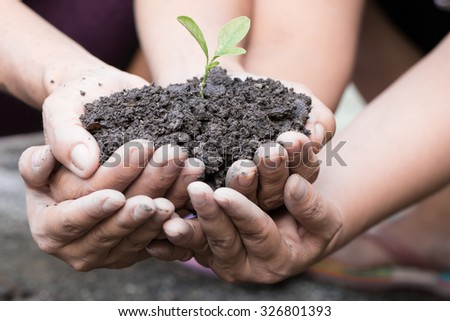 Cupped hands holding a green plant - stock photo