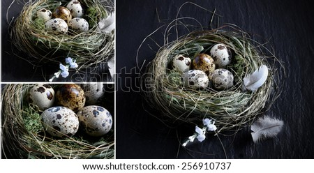 Curated concept montage image for Easter, pension funding, or investments. Genuine quail eggs in a authentic grass birds nest against a dark background. Copy space. - stock photo